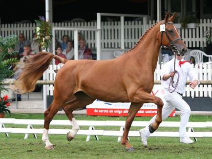 http://horses.nl/wp-content/uploads/2008/04/Gelders-paard_434x326.jpg?0.2553313004318625