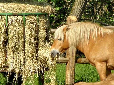 haver kopen paard