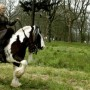 LARP (live action role playing) met je paard